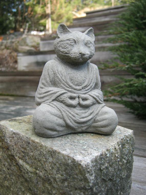 cat budha